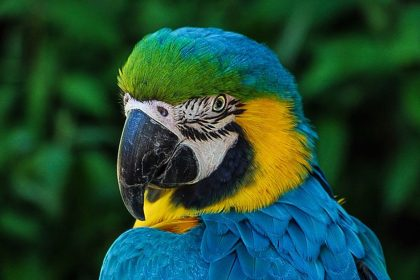 The Freedom Parrot - A Short Spiritual Story by Osho