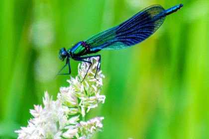 The Dragonfly - A Short Spiritual Story