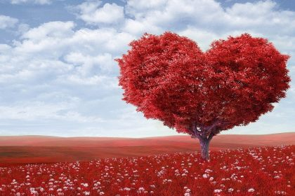 The Affection of A Tree - Spiritual Story By Osho