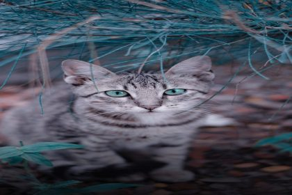 A Cat's Dream - Funny Spiritual Story by Osho