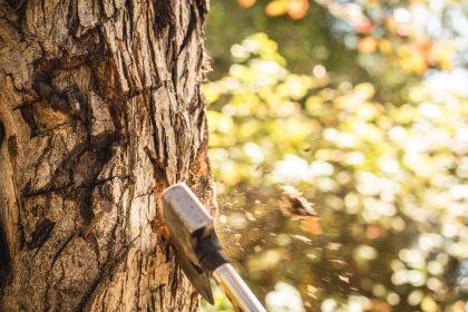 Cutting Down The Tree To Reap The Fruit - A Zen Buddhist Spiritual Story