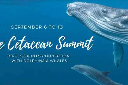 The Cetacean Summit 2021 - Connect Deeply with Dolphins & Whales